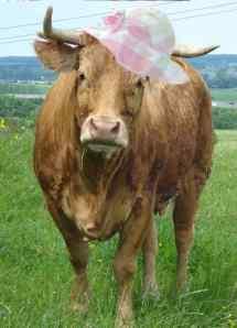 cheery hat
